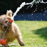 Die Hitze macht nicht nur Mensch und Tier zu schaffen sondern auch sensibler Technik.